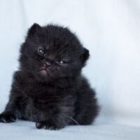 Vrh G aneb máme nová koťátka